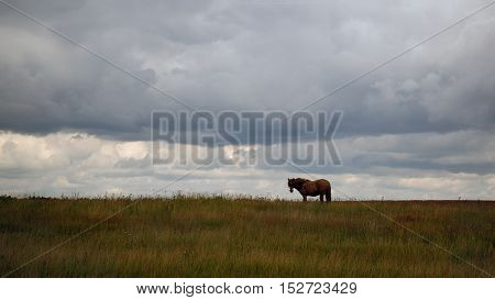 Far horse grazing in a field on the sky background