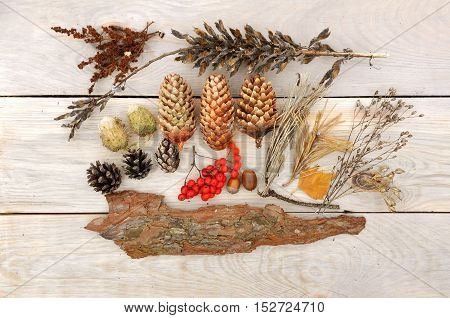 Autumn Still Life. Rowan berries pine cones bark and dried herbs on a light wooden surface. View from above.