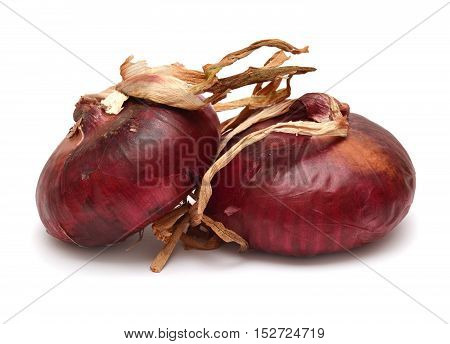 Onion on a white background. Food, fresh, grocery, group.
