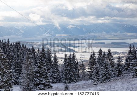 Winter mountain landscape - top view on snow covered valley and spruce forest. High Tatras in the background. Slovakia.