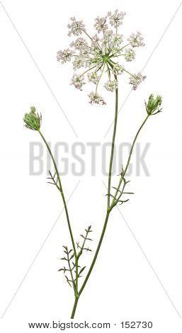 Wild Flower 8