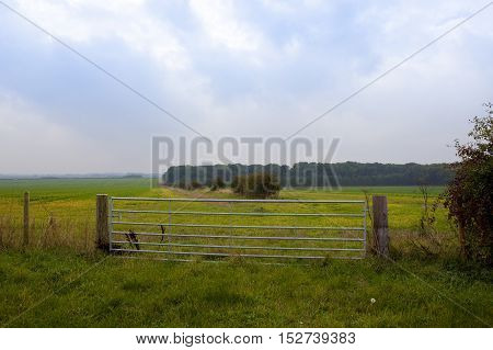 Woodland With Metal Gate