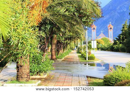 Green Palm Trees On The Street