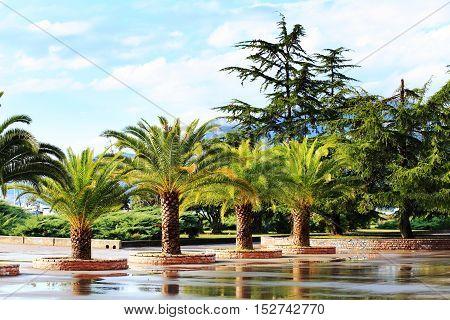 Bright Sun Shines On Green Palms