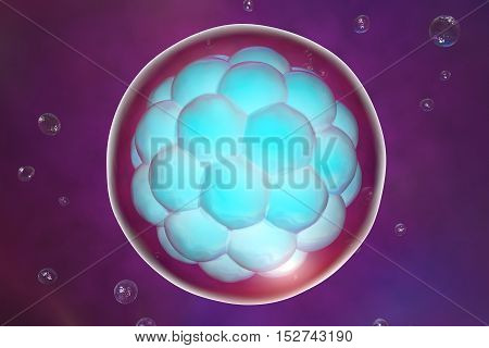 Human embryo on colorful background. 3D illustration