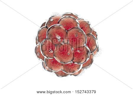 Destruction of a human embryo. 3D illustration which can be used to illustrate teratogenic effect of drugs, viruses, microbes, abortive medicines, nanoparticles