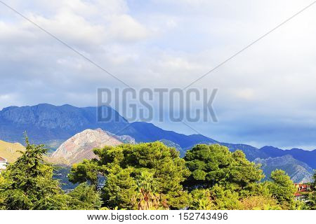Green Upper Branches Of Tree