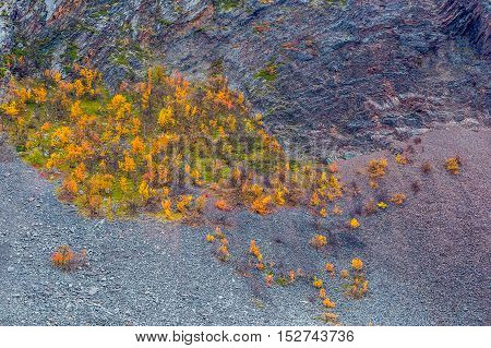 Autumn colored trees and rocky mountain in northern Norway