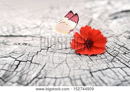 Old wooden cracked surface with flower and butterfly. Old wooden background.