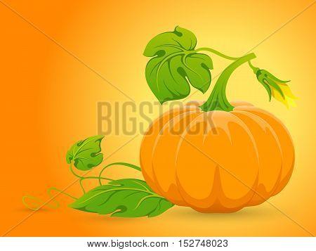 Vector Orange Pumpkin.