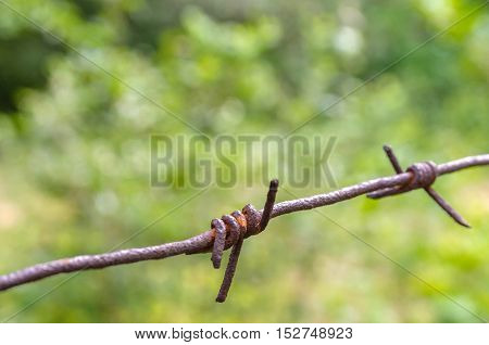 Barbed wire fence on a green background trees. Rusty and the old.