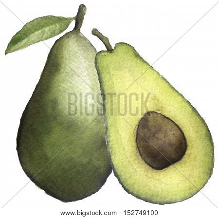 watercolor sketch of an avocado on white background