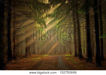 Image of the coniferous forest in the early morning - sun beams in fog haze