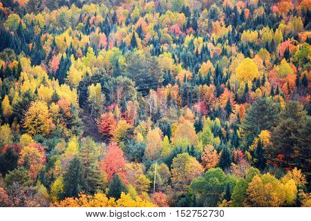 Canopy of fall trees on Appalachian mountains in Vemont