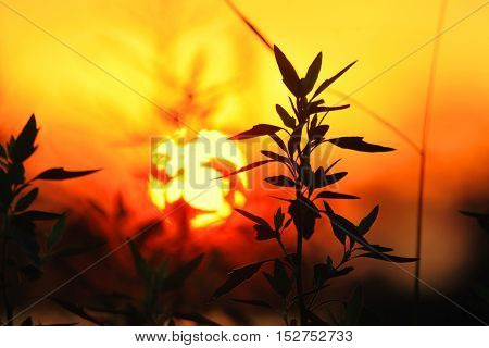 Sunset looking through branches of plant