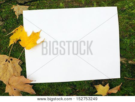 white page for writing in nature background autumn leaves card and peet moss