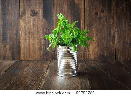 Bunch of fresh mint in tin can on wooden background selective focus toned horizontal