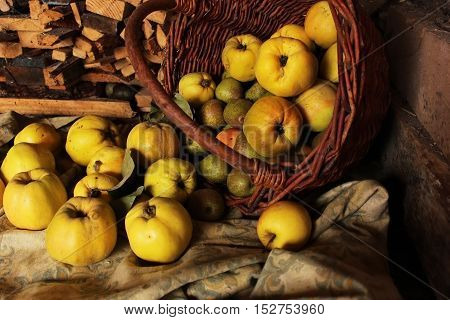 quince big juicy ripe pear in a basket on the wood background