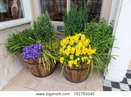Taken on a visit to Christchurch in Dorset in the late spring of these two tubs in a door way in the little hight street.