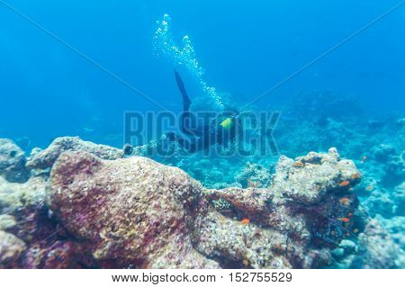 A Diver Swims Above The Ocean Floor With A Reef, Maldives