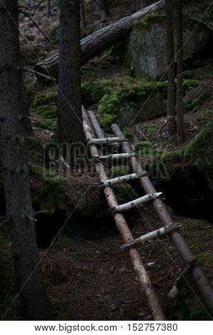 Ladder In The Dark Forest