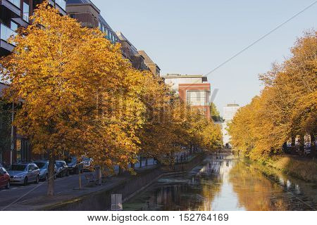 Horse Chestnut (Aesculus hippocastanum) on both sides of a Town canal in the Hague, Den Haag, the Netherlands