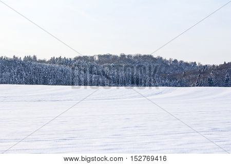 Wide winter wonderland. A wonderful icy forest at a white winter scene. Snow everywhere. Copyspace.