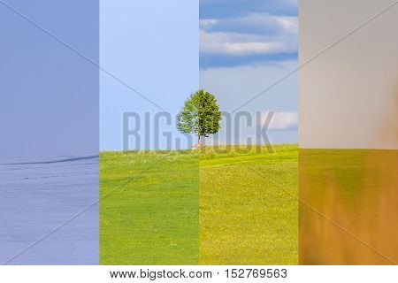 Climate change winter spring summer fall time over the year. Nature weather visual with a single tree on a hill. Cold snow and a juicy green meadows have a transition to a warm autumn field.