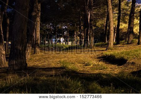 dark night park view . trees lit by park streetlight. City lights are shown on background