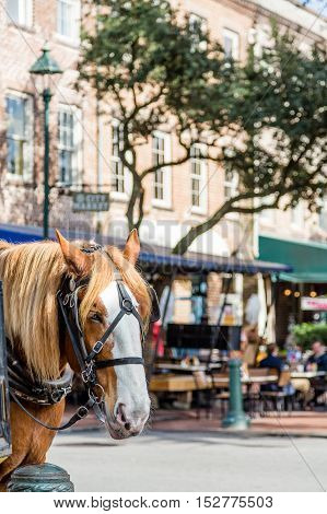 A Horse in City Market in Savannah