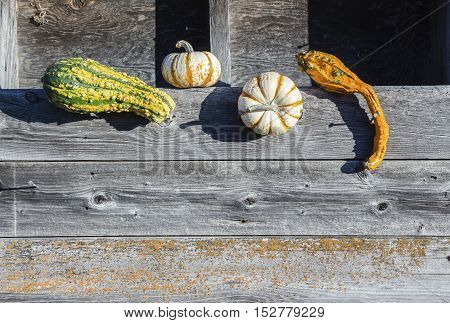 horizontal image of a couple of colorful gourds and two small pumpkins sitting against an old rustic wood background with room for text.