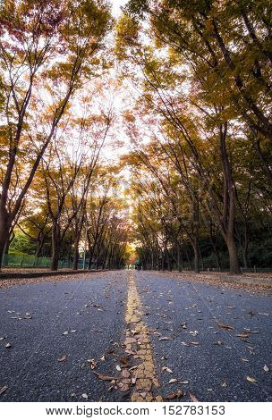 Incheon Grand Park Low Angle Fall
