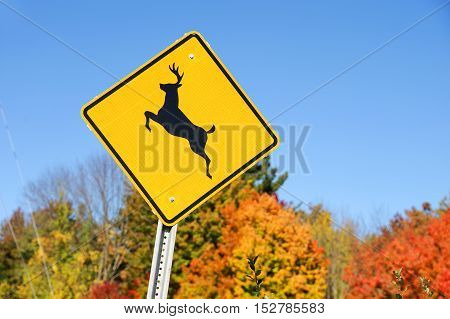 deer crossing sign in front of autumn forest