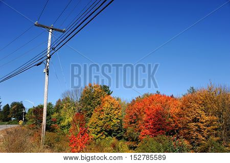 power pole under blue sky with autumn colorful trees