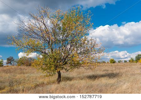 Lonely branchy apricot tree against blue cloudy sky at fall season