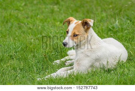 Adorable stray dog with sad eyes resting in spring grass