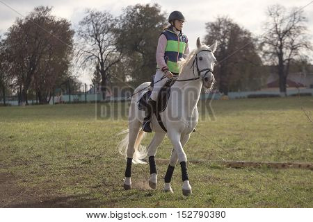 Gomel, Belarus - October 16, 2016: Rider On A Horse To Warm Up Before Competitions