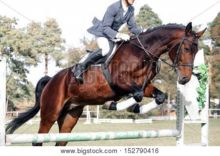 Bay Horse In Jumping Show Against