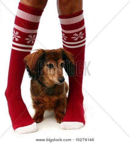 Legs in Christmas stockings with a puppy, isolated.