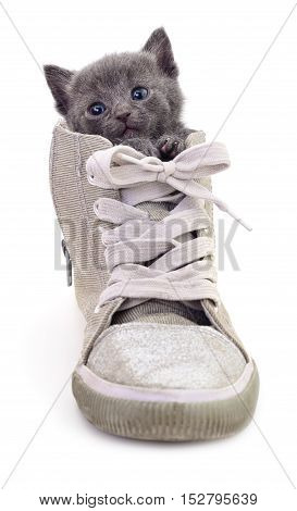 Kitten in boot isolated on white background.