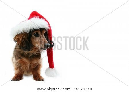 Dachshund Santa, one in a holiday series featuring the same pup.