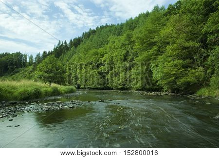 The Ourthe river running wild surrounded by green forest.