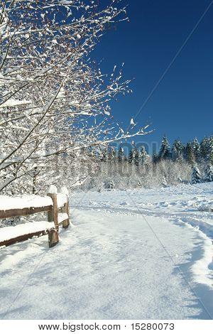 Winter scene with a bright blue polarized sky.