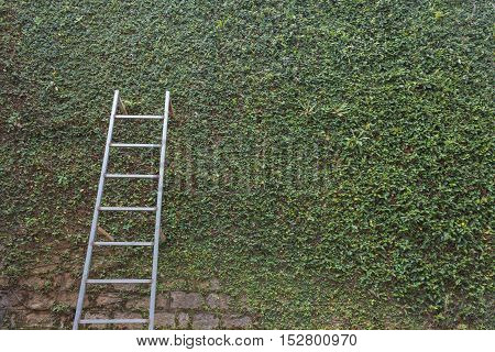 Steel Ladder On Green Leaf Ivy Plant Covered Stone Fence Wall Background With Empty Black Copy Space