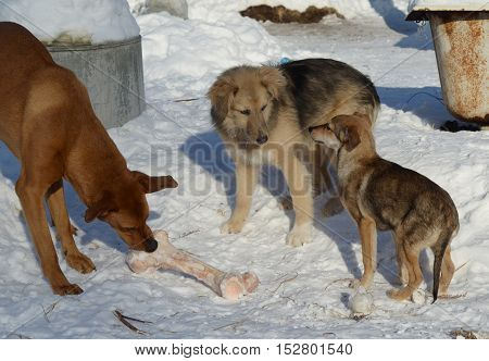 three friends dogs shared a bone and game