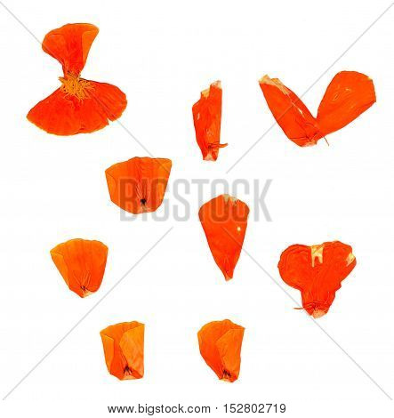 Transparent Dried Pressed Orange Eschscholzia