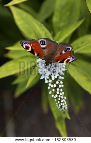 Closeup on a butterfly on a flower