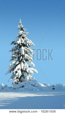 Single snow covered evergreen against a polarized blue sky.