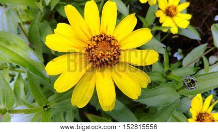 Daisies, yellow, beautiful, flowers,greeting, summer, sun, greens, magnificent flower fields, inviting greetings in colors,bright, Sunny flowers