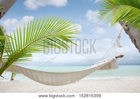 view of nice hummock with palms around in tropical environment